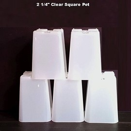 2.25'' Clear Square Plastic Orchid Pot (15 Pack) Sophie's Orchids