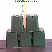 2 3/4'' Green Square Plastic Orchid Pot (10 Pack) Sophie's Orchids